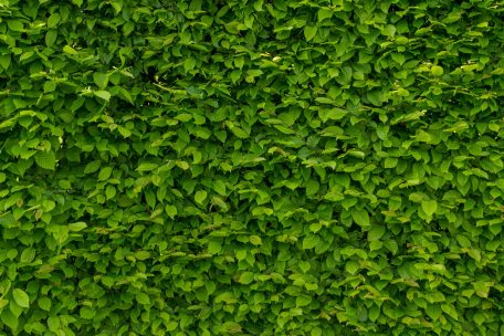 intense-green-wallpaper-with-hornbeam-1407727_1920